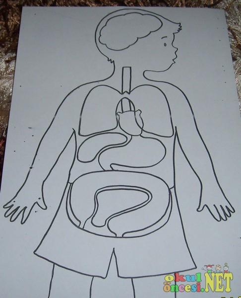 Vücudumuz ve sağlık temizlik çalışmaları
