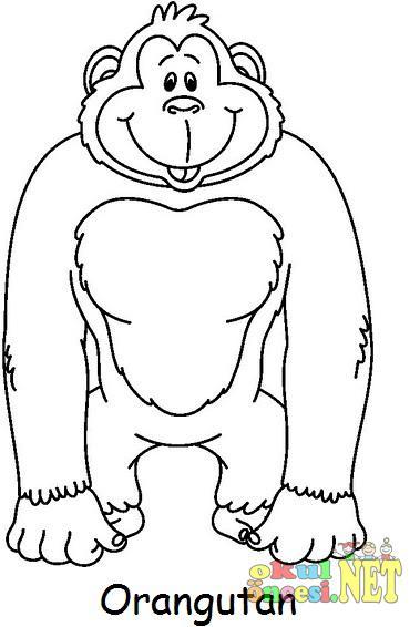 Maymun Türleri Boyama Sayfaları Okul öncesi Okul öncesi