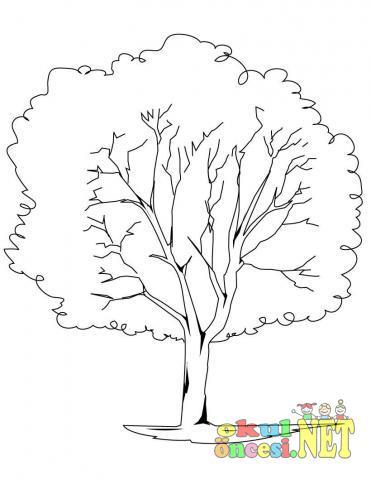 Ağaç Boyama Sayfaları 28 Tane Okul öncesi Okul öncesi