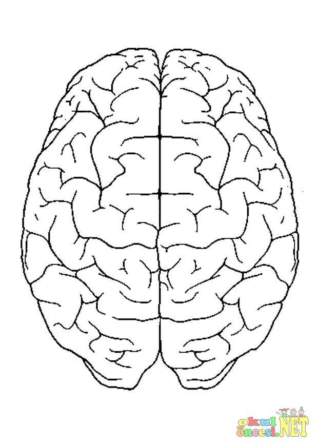 Beyin Resmi Boyaması Okul öncesi Okul öncesi Etkinlikleri Ana