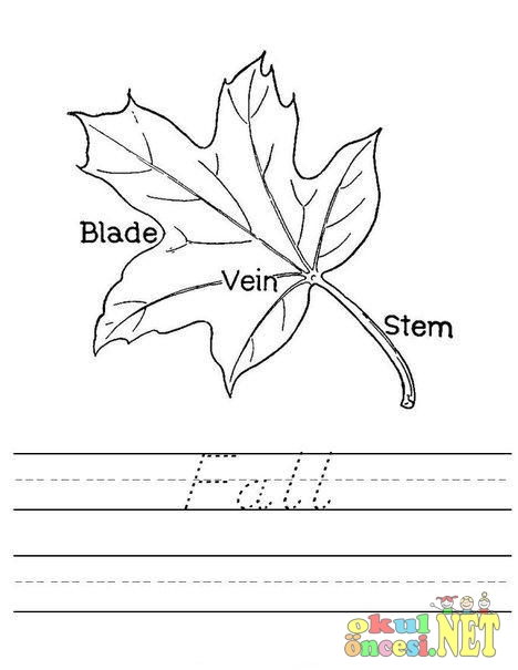 Fall Sonbahar Ingilizce çalışma Sayfası Okul öncesi Okul