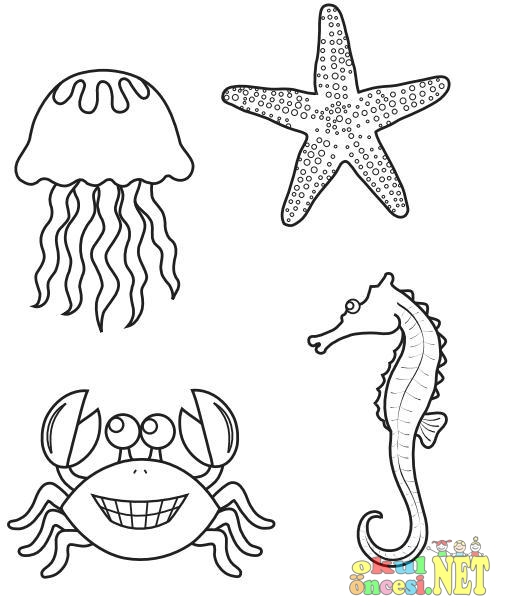Deniz Canlıları Boyama Sayfaları Okul öncesi Okul öncesi