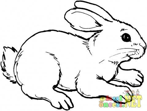 Tavşan Boyama Okul öncesi Okul öncesi Etkinlikleri Ana Okulu