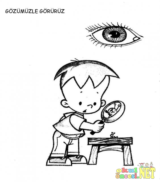 Duyu Organları Boyama Sayfaları Okul öncesi Okul öncesi