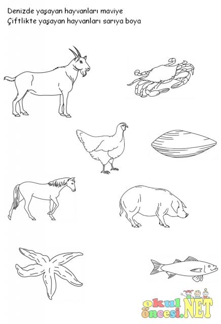 Hayvanlari Yasadiklari Yerlere Gore Gruplandirma